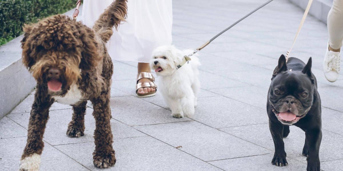 self defense for dog walkers